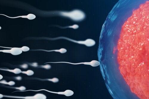 espermatozoides-fecundacion