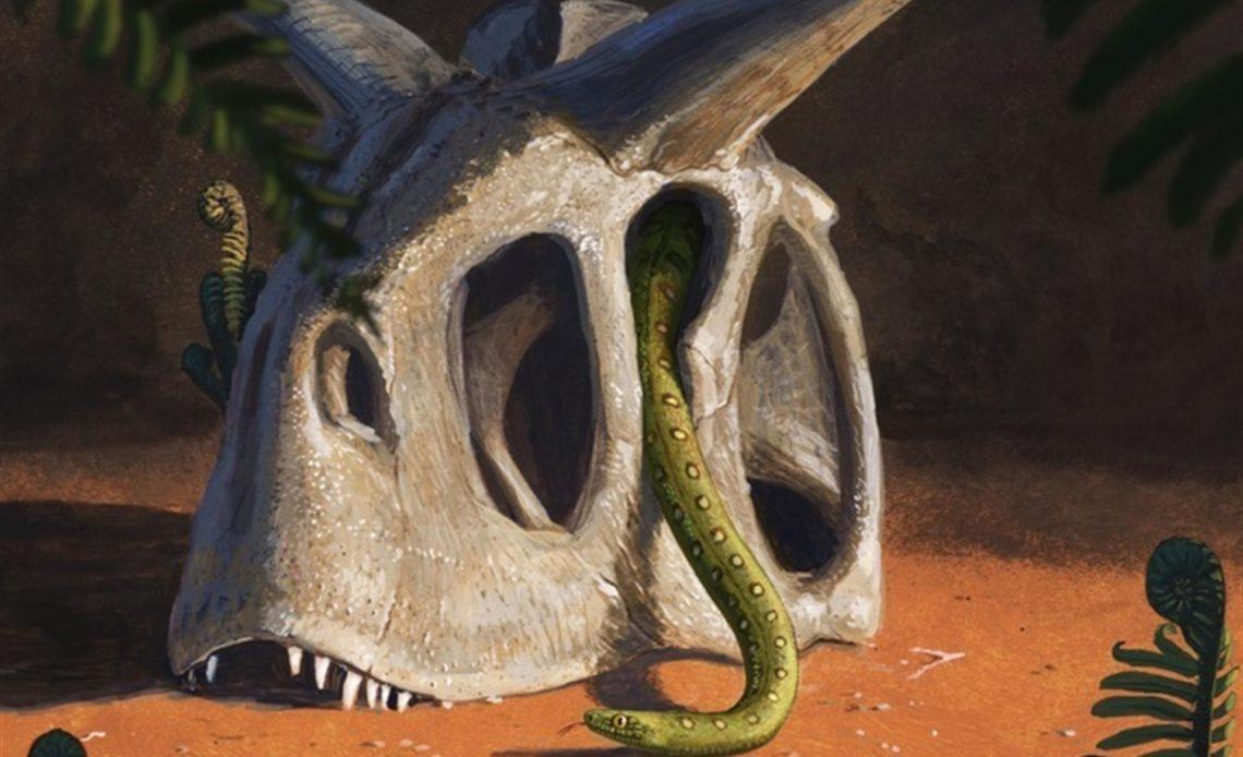 La serpientes, herederas de los supervivientes del fin de los dinosaurios