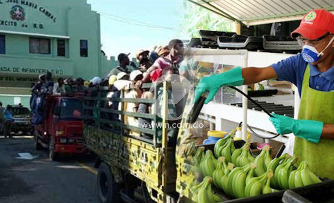 Sector bananero
